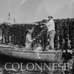 Cozzecari - Fotografia 25x25
