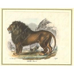 leone--litografia-originale-depoca