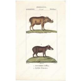 facochero-e-tapiro--litografia-con-coloritura-a-mano-coeva-xix-sec