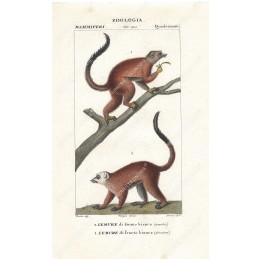 lemure--litografia-con-coloritura-a-mano-coeva-xix-sec