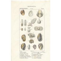 bulle-lombaria-ecc--litografia-con-coloritura-a-mano-coeva-xix-sec