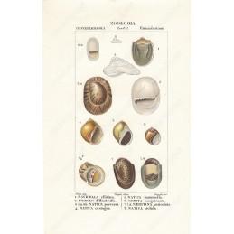 navicella-pileolo-ecc--litografia-con-coloritura-a-mano-coeva-xix-sec
