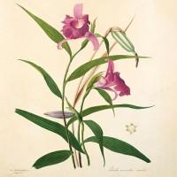 Botanica & Giardinaggio